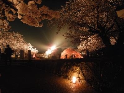 soku_14292.jpg :: 植物 花 桜 サクラ 夜桜