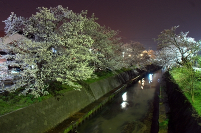 soku_14377.jpg :: 夜 桜 川