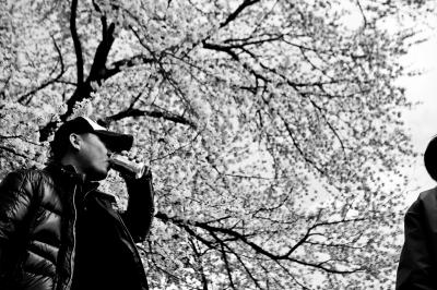 soku_14567.jpg :: 植物 花 桜 サクラ 人物 男性 モノクロ 白黒