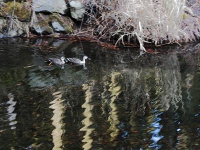 soku_14727.jpg :: PowerShotS95 風景 水分 鳥成分 鳥 湖 碓氷湖 ブレ(笑)