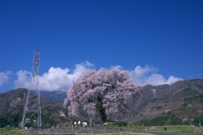 soku_14732.jpg :: 植物 花 桜 サクラ 建築 建造物 塔 鉄塔