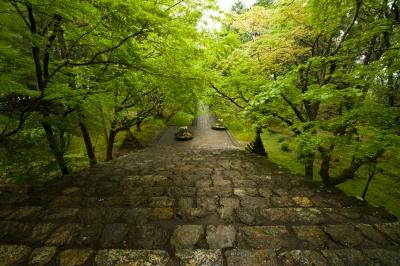 soku_14827.jpg :: 風景 寺院 階段 新緑 雨 竹林寺