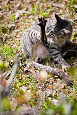 soku_14931.jpg :: 動物 猫 キジトラ クンクン