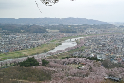 soku_14953.jpg :: 一目千本桜