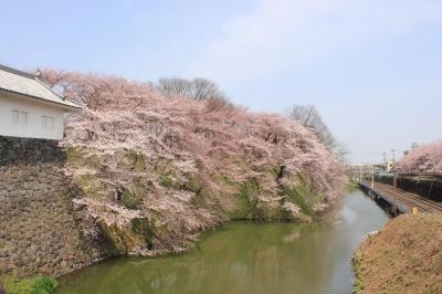 soku_15063.jpg :: 建築 建造物 城 植物 花 桜 サクラ 満開
