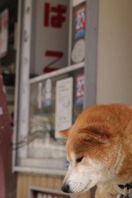 soku_15096.jpg :: SD1 犬 タバコ たばこ