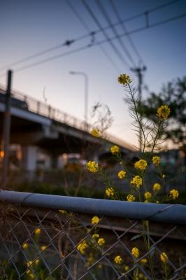 soku_15424.jpg :: 植物 花 風景