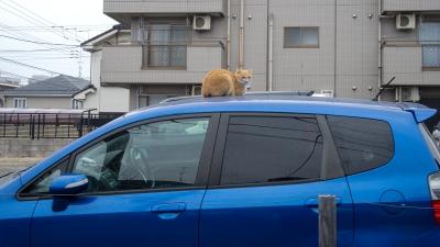 soku_15719.jpg :: 猫