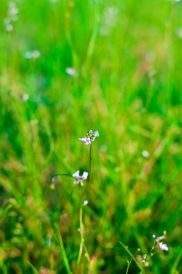 soku_15728.jpg :: 植物 花 その他