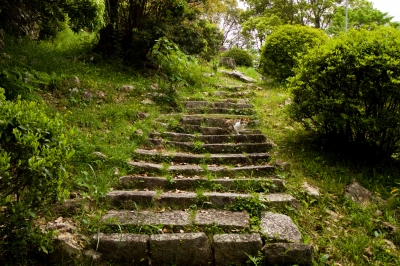 soku_16177.jpg :: 階段 動物 哺乳類 猫 ネコ