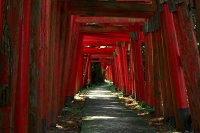 soku_16433.jpg :: 建築 建造物 神社 大友稲荷神社 鳥居 by Niigata