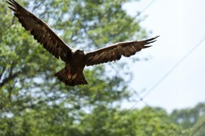soku_16621.jpg :: 動物 鳥 猛禽類 鷲 ワシ