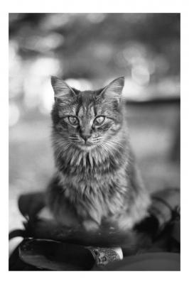 soku_16703.jpg :: 動物 哺乳類 猫 ネコ 銀塩 フィルム 白黒 モノクロ