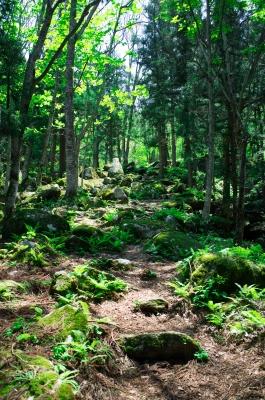 soku_16772.jpg :: 岩手 遠野 田舎 風景 自然 山