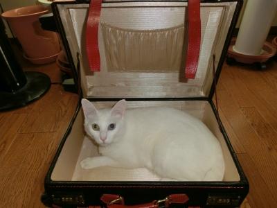 soku_16882.jpg :: 動物 哺乳類 猫 ネコ