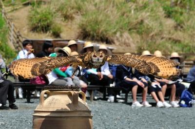 soku_16932.jpg :: 掛川花鳥園 ベンガルワシミミズク 飛翔