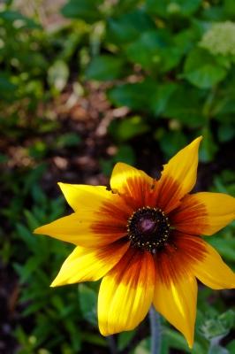 soku_16950.jpg :: 植物 花 黄色い花