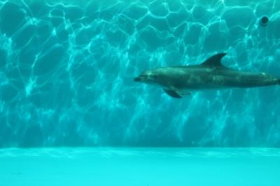soku_17087.jpg :: イルカ 水分 水族館