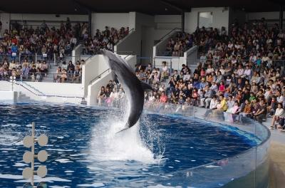 soku_17093.jpg :: イルカ 水族館 プール