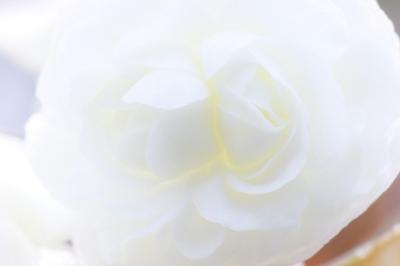 soku_17120.jpg :: 植物 花 エクステンションチューブ ダブルテレコン by Niigata