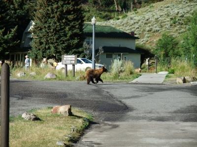 soku_17337.jpg :: 動物 哺乳類 熊 クマ