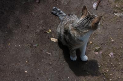 soku_17440.jpg :: 動物 哺乳類 猫 ネコ