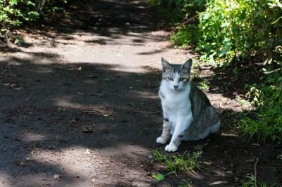 soku_17441.jpg :: 動物 哺乳類 猫 ネコ