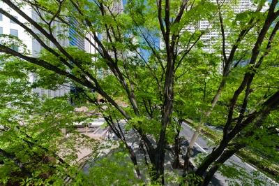 soku_17507.jpg :: 新宿 都市の風景 新緑 コクーンビル