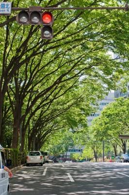 soku_17512.jpg :: 都市の風景 新宿 並木道 信号機 新緑 腕