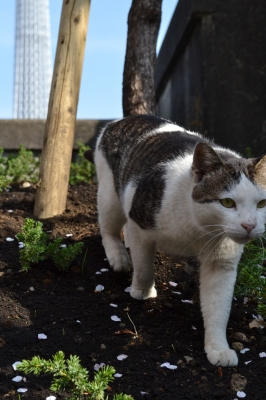 soku_17577.jpg :: 動物 哺乳類 猫 ネコ