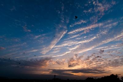 soku_17633.jpg :: 空 雲 夕焼け 鳥 ムクドリ