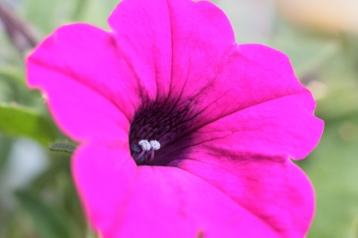 soku_17757.jpg :: 植物 花 エクステンションチューブ by Niigata