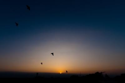 soku_18015.jpg :: 空 夕日 夕焼 夕暮れ 鳥 ムクドリ
