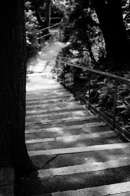 soku_18191.jpg :: 風景 自然 歩道 遊歩道 モノクロ