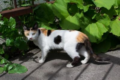 soku_18196.jpg :: 動物 哺乳類 猫 ネコ