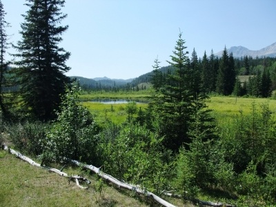 soku_18207.jpg :: カナディアンロッキー 風景 自然 森林 外国