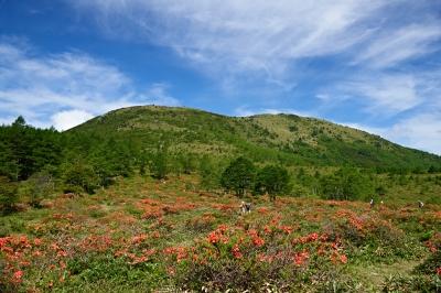 soku_18346.jpg :: 風景 自然 山 植物 花 赤い花