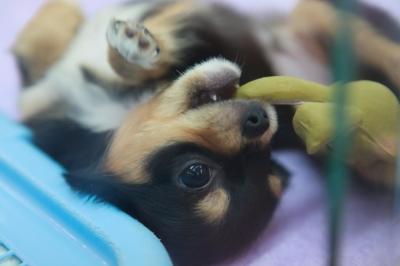soku_18550.jpg :: 動物 ペット 犬