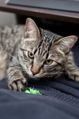 soku_18740.jpg :: あんこ 動物 哺乳類 猫 ネコ