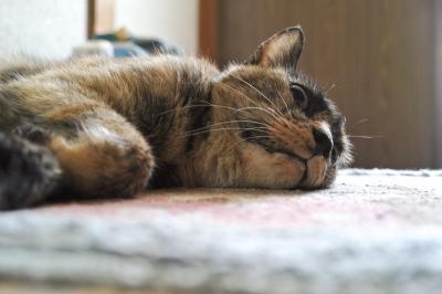 soku_18846.jpg :: 動物 哺乳類 猫 ネコ