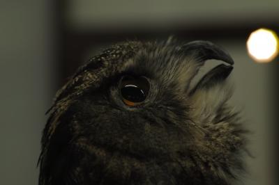 soku_18875.jpg :: SD1 掛川花鳥園 動物 鳥 猛禽類