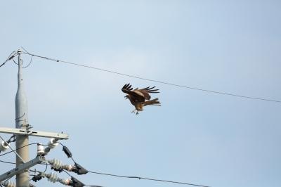 soku_18949.jpg :: 動物 鳥 猛禽類