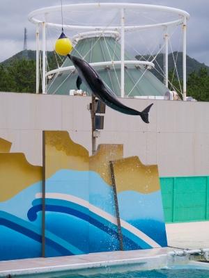 soku_19011.jpg :: 動物 海の生物 イルカ 水族館 鴨川シーワールド