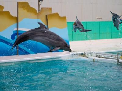 soku_19013.jpg :: 動物 海の生物 イルカ 水族館 鴨川シーワールド