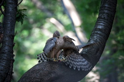 soku_19342.jpg :: 野鳥 食事 動物 鳥 野山の鳥