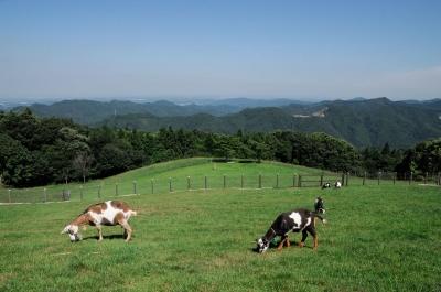 soku_19364.jpg :: 彩の国 ふれあい牧場 ヤギ
