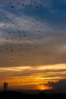 soku_19545.jpg :: 夕焼け 夕日 空 雲 風景 鳥