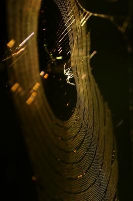 soku_19551.jpg :: 動物 虫 昆虫 蜘蛛 クモ クモの巣