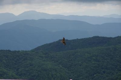 soku_19564.jpg :: 風景 自然 山 動物 鳥 猛禽類