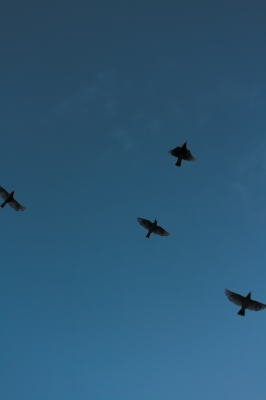 soku_19582.jpg :: 空 鳥